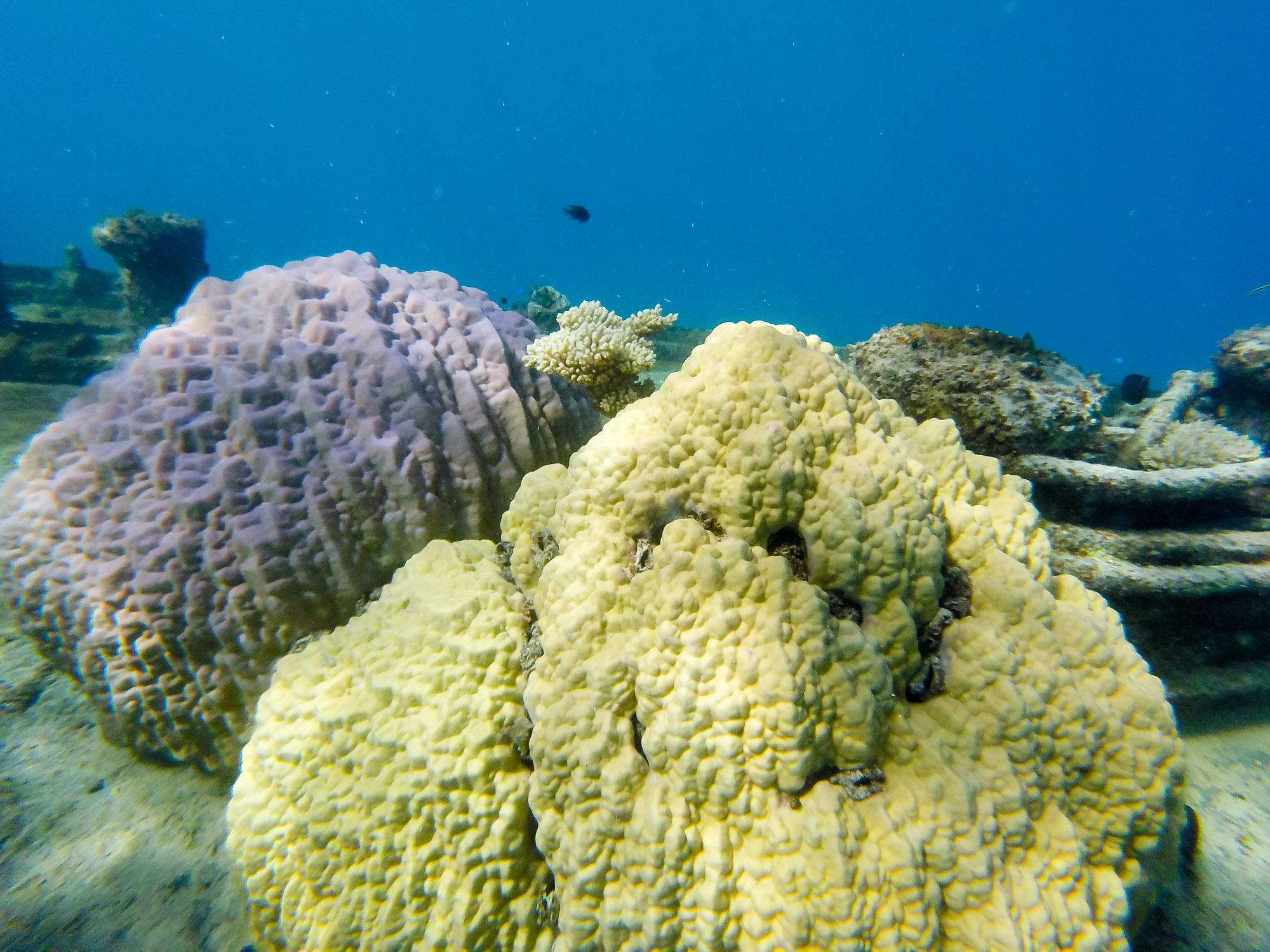 Coral growth on the stern of the shipwreck