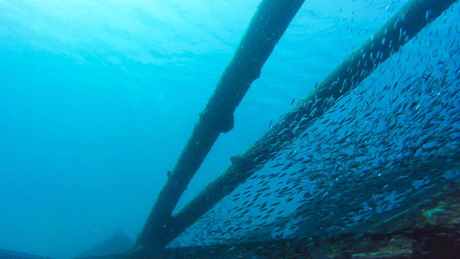 School of juvenile fish taking shelter on the shipwreck