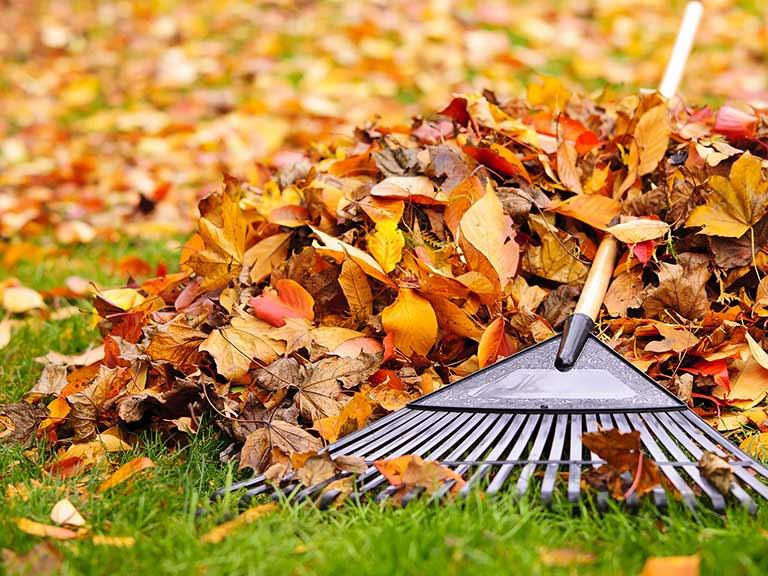 autumn-lawn-care.jpg