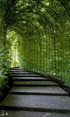 """Arch - The graceful curve of a well-placed arch provides a fantastic gateway into the garden or section of the garden. Arches brilliantly support climbers such as clematis, jasmine, honeysuckle, and passion flower. Fruit trees, like apples, pears, and plums, can also be trained upwards along an arch, over time creating a """"green tunnel"""" — a grand entrance to any orchard."""