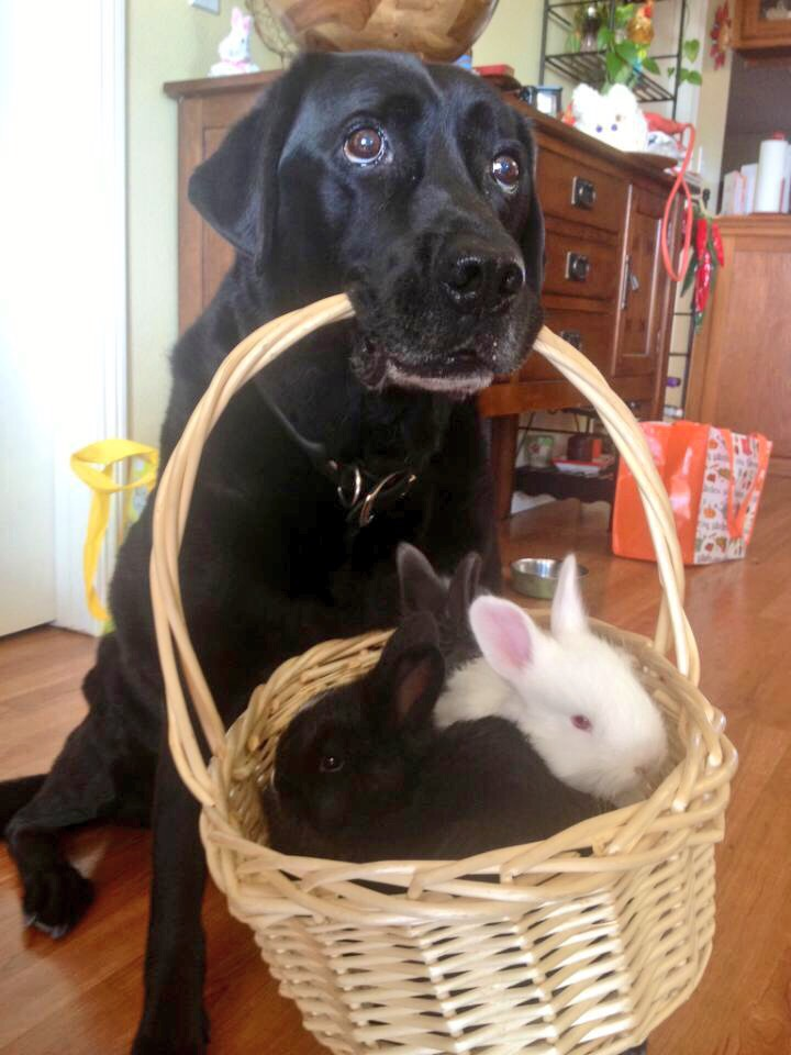 Always down to carry a basket of bunnies