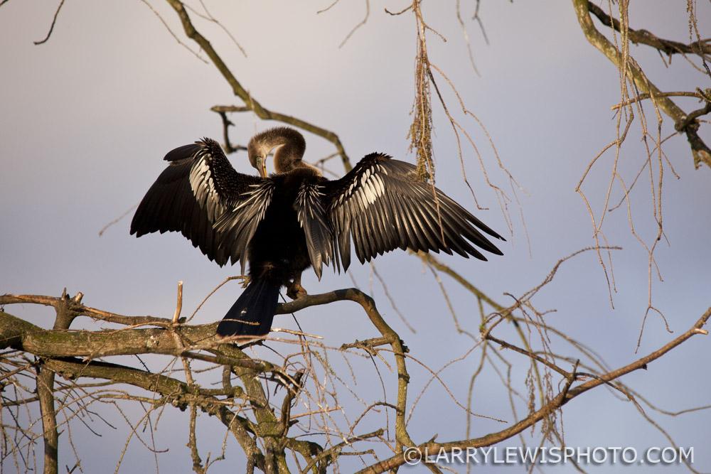Gatorland_Bird_3.jpg
