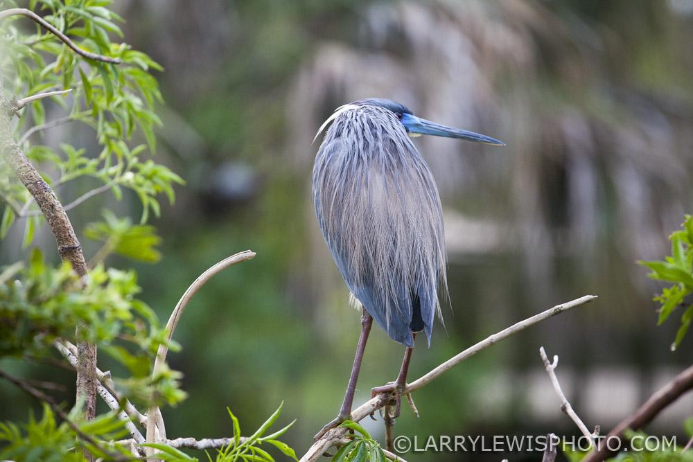 Gatorland_Bird_5.jpg