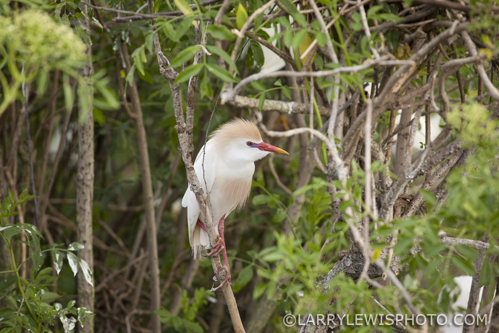 Gatorland_Bird_8.jpg