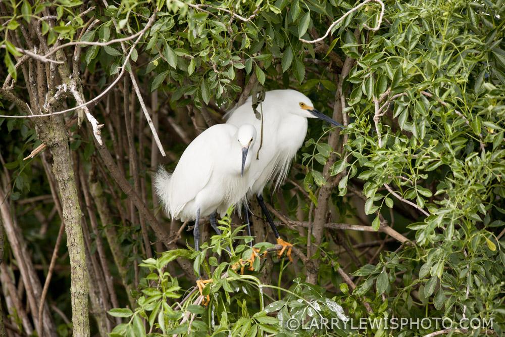 Gatorland_Bird_9.jpg