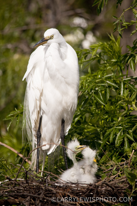 Gatorland_Bird_11.jpg