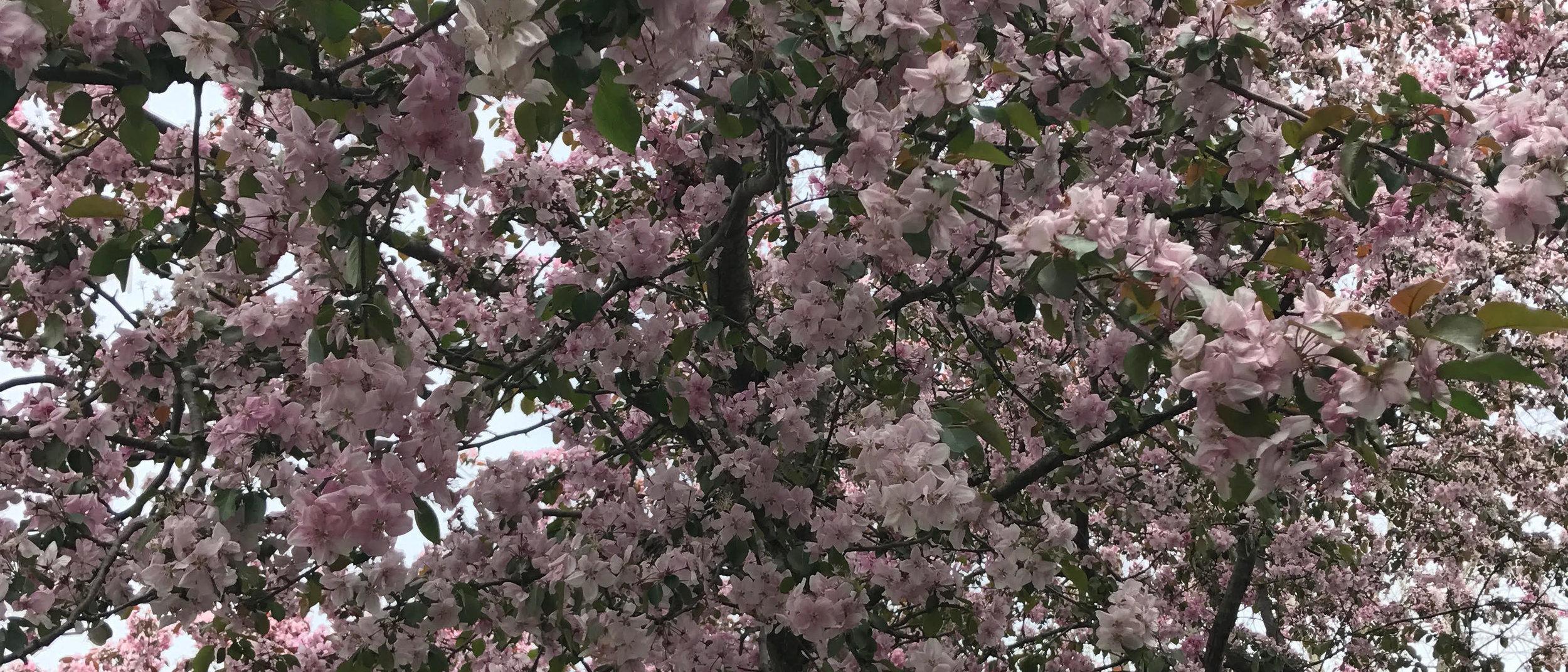 alex g blossom.jpg
