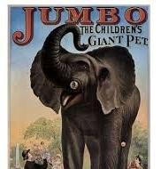 jumbo - giant pet.jpg