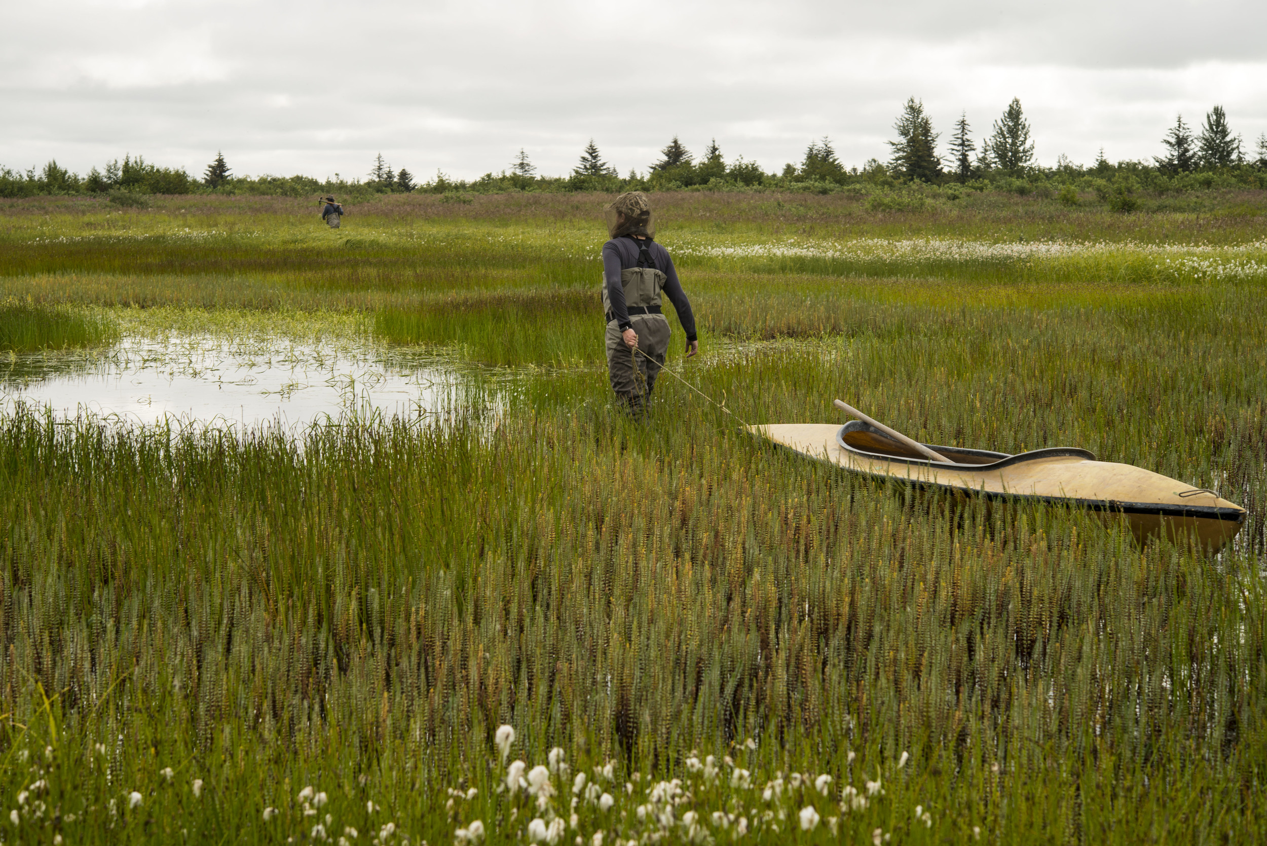 Melissa Gabrielson drags her poke boat behind her toward the next nest island on her list. The crew uses poke boats to carry shovels and maintenance tools through brush and paddles across ponds, sloughs and beaver dams to reach the artificial islands.