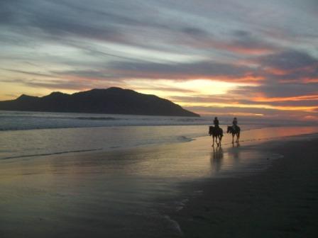SUNSET HORSES.JPG