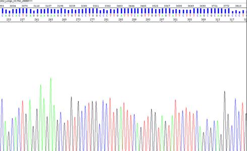 DNA Dizileme