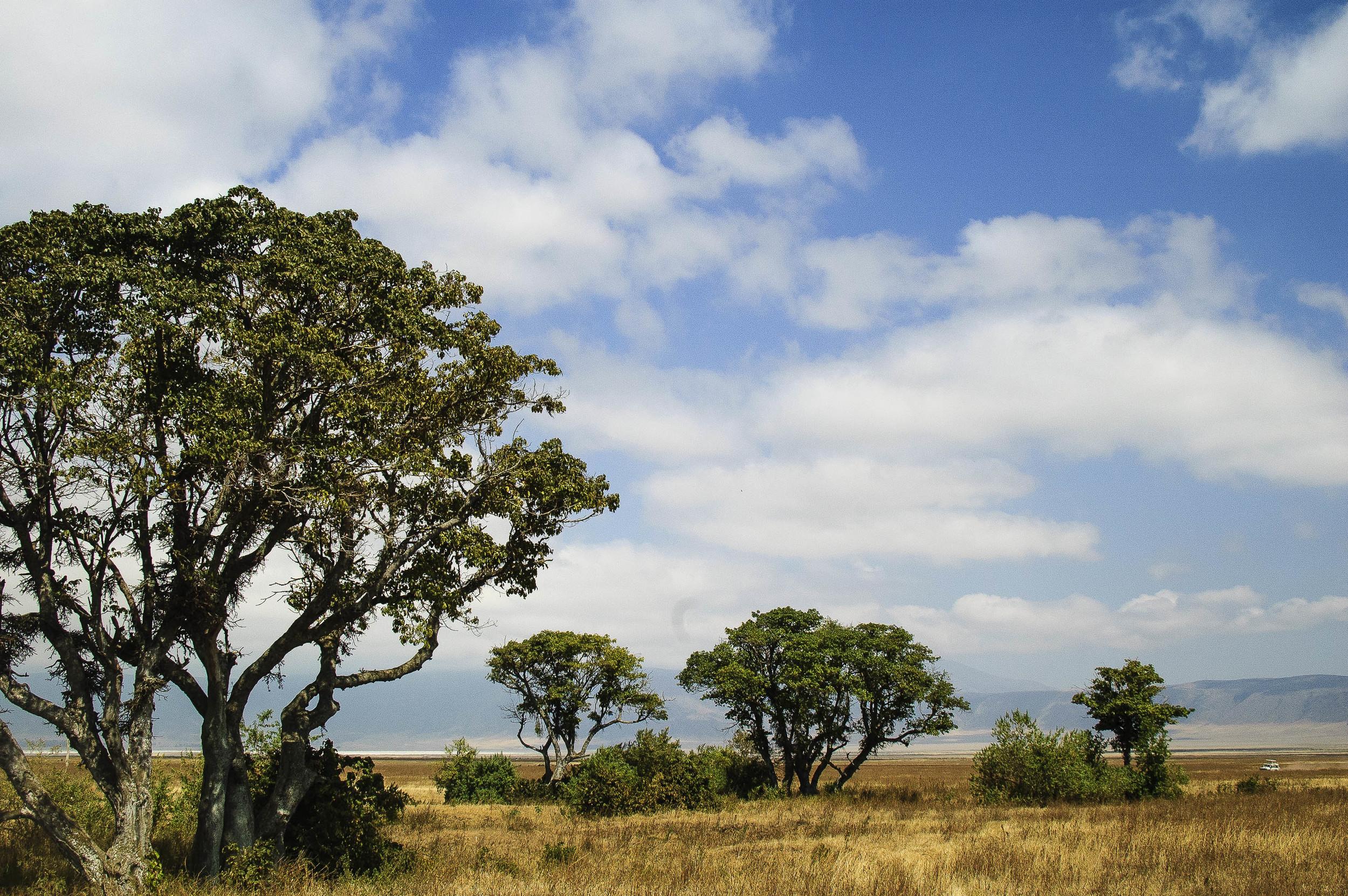Tanzania2.jpg