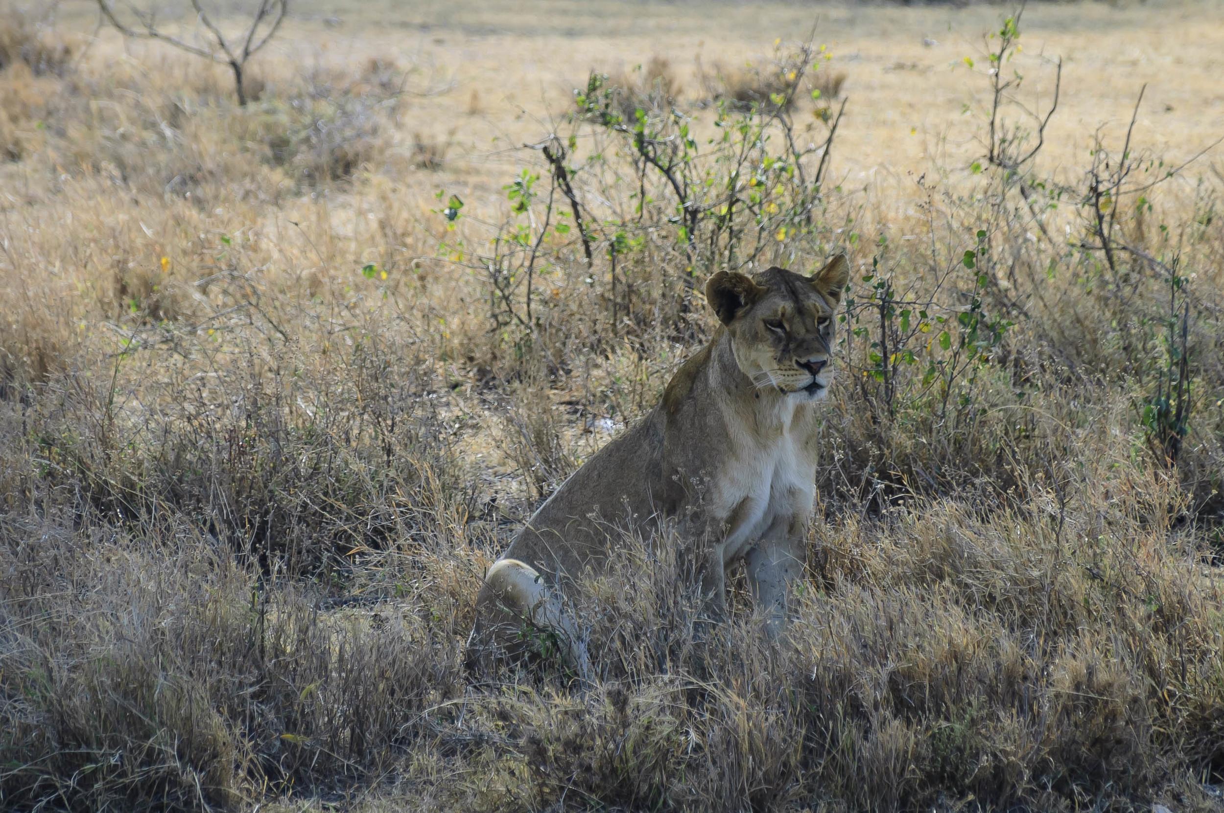 Tanzania7.jpg