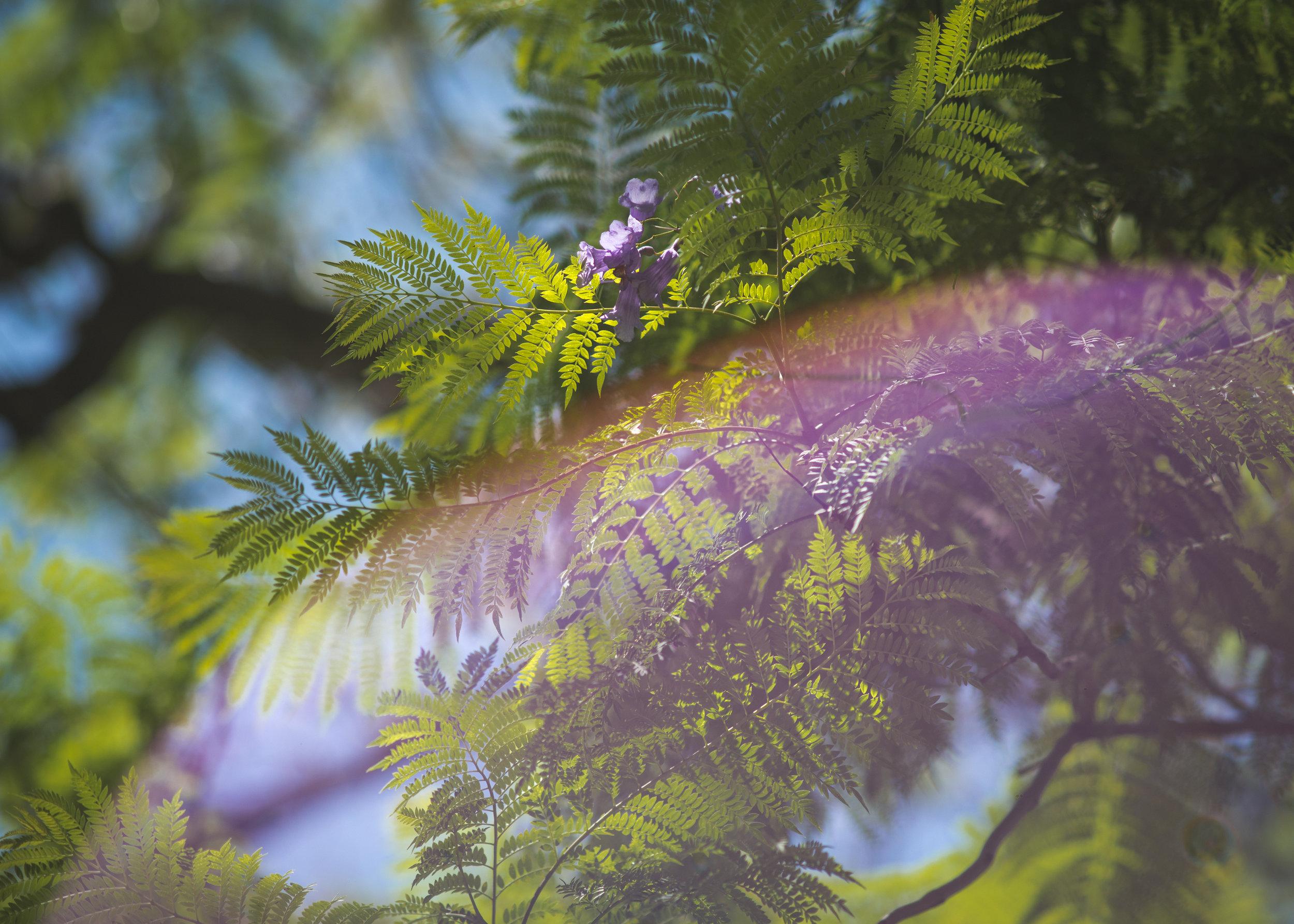 LA2017_Caitlin Franzmann_Tree-Telling (Keelan O'Hehir)-203.jpg