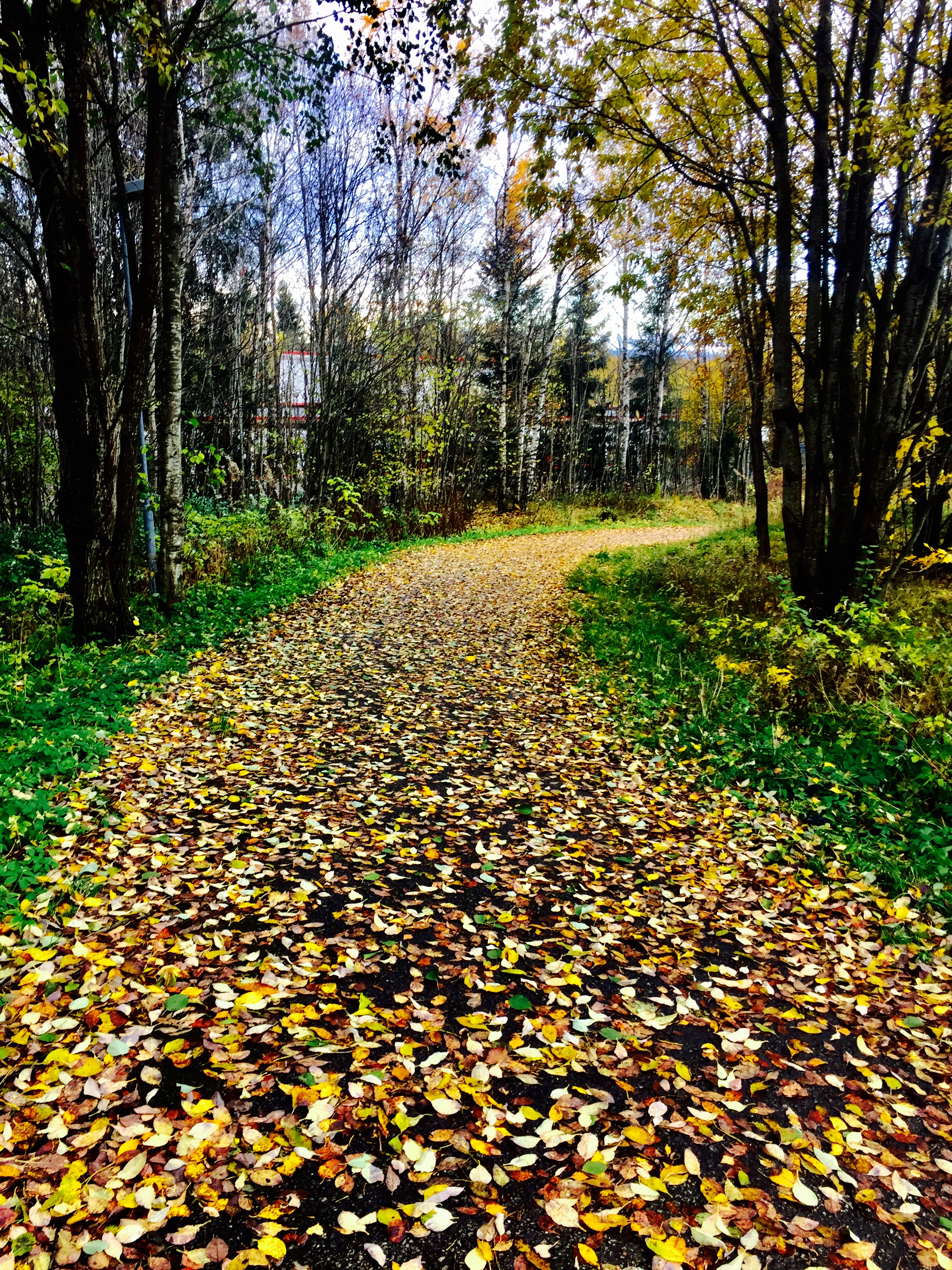 En vakker høstdag! Det tar omtrent 45 minutter å spasere hjemmenfra til treningssenteret, i mitt tempo, vel og merke.