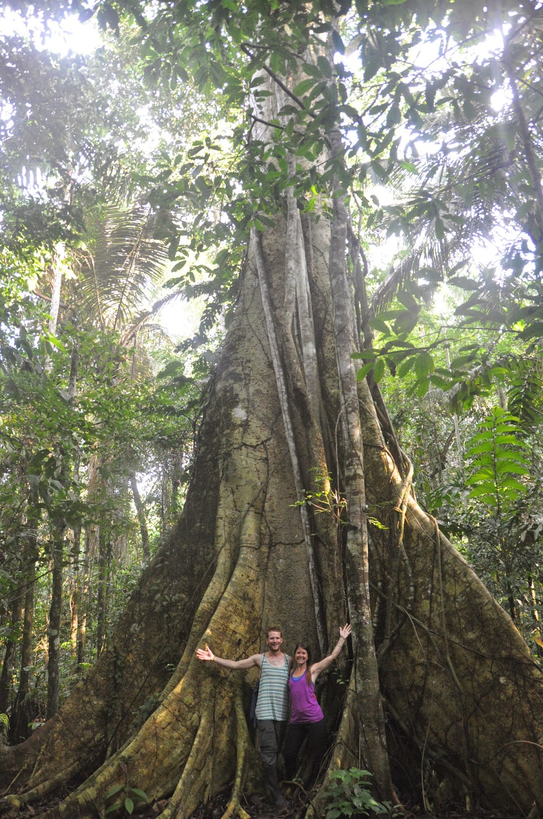 Some of the trees were MASSIVE!