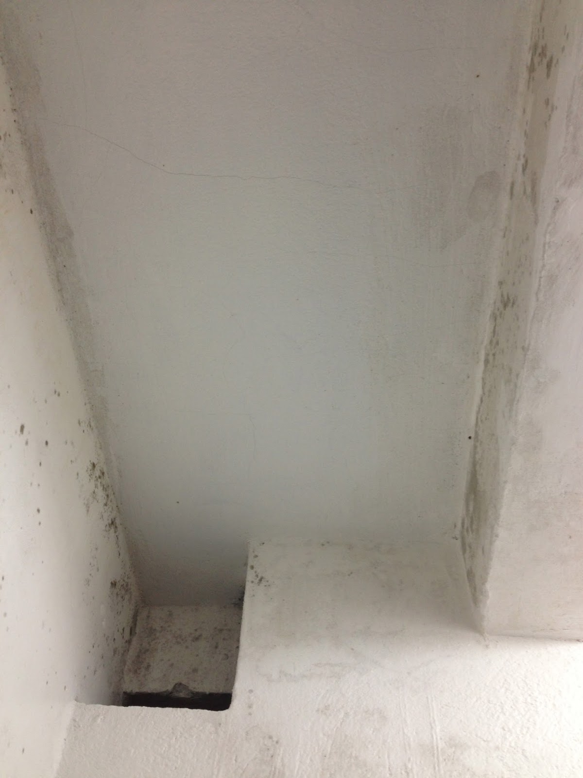Mold on the ceilings