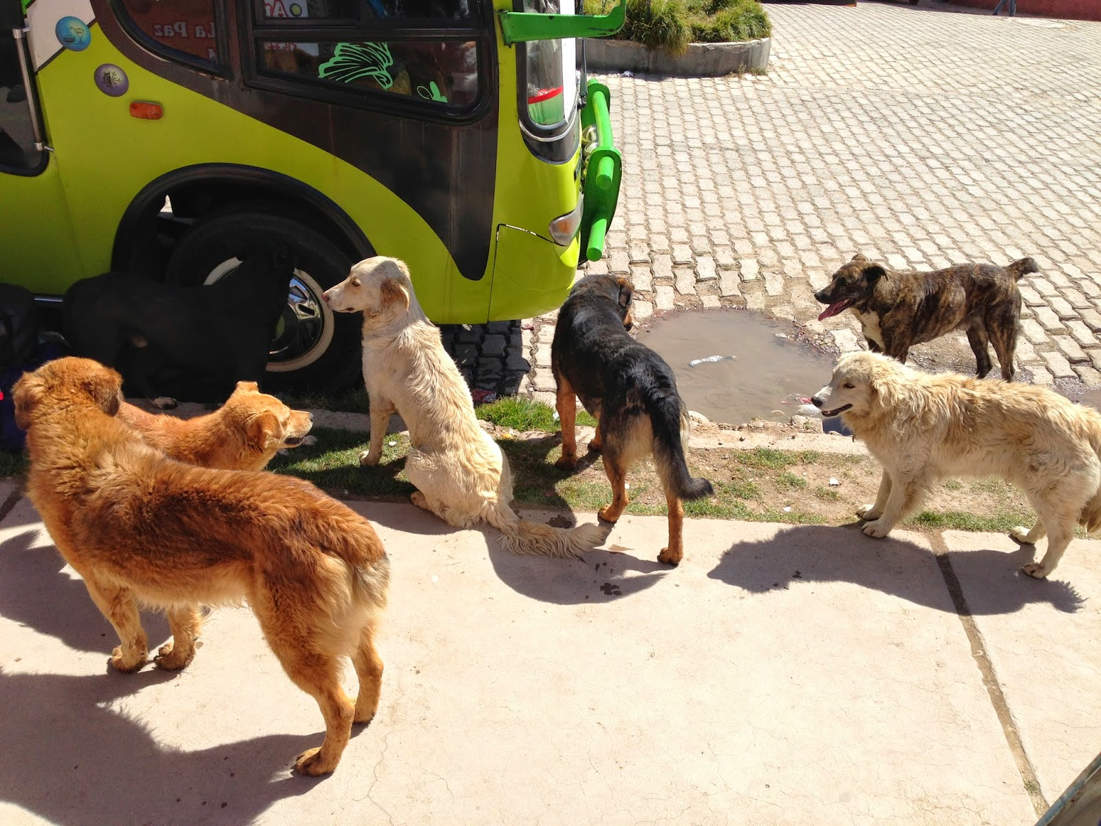 A pack of stray dogs kept us entertained while we waited for the bus we weren't sure was ever going to show up.