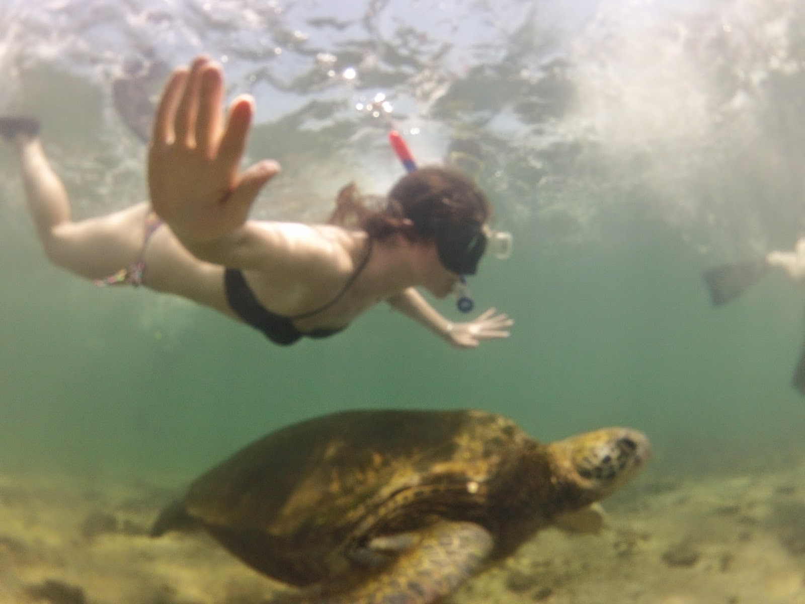 Just an average day, swimming with sea turtles.