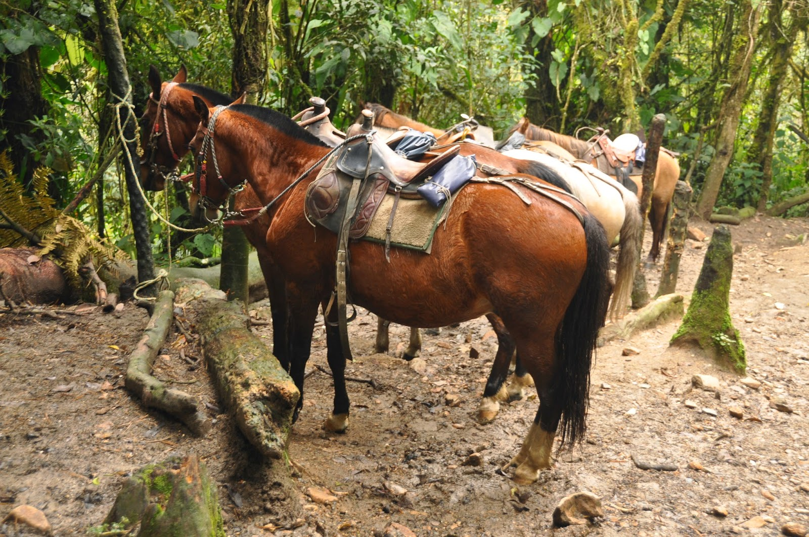 Instead of hiking, some people rode horses through the valley.