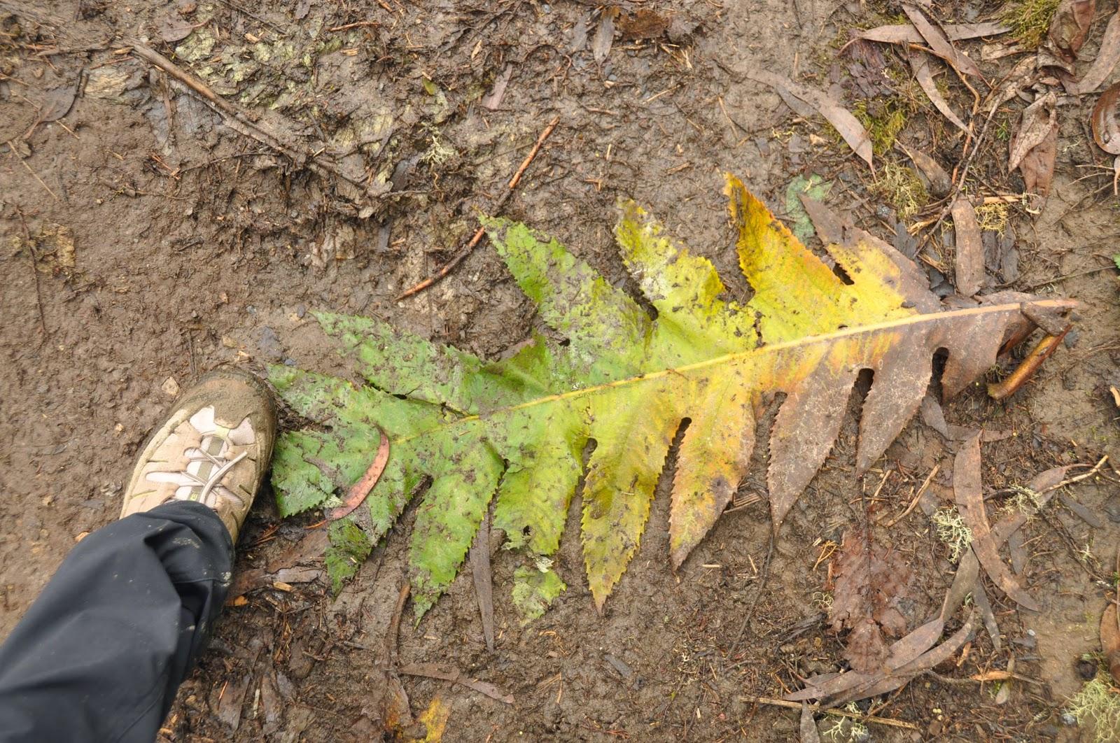 Giant leaves!