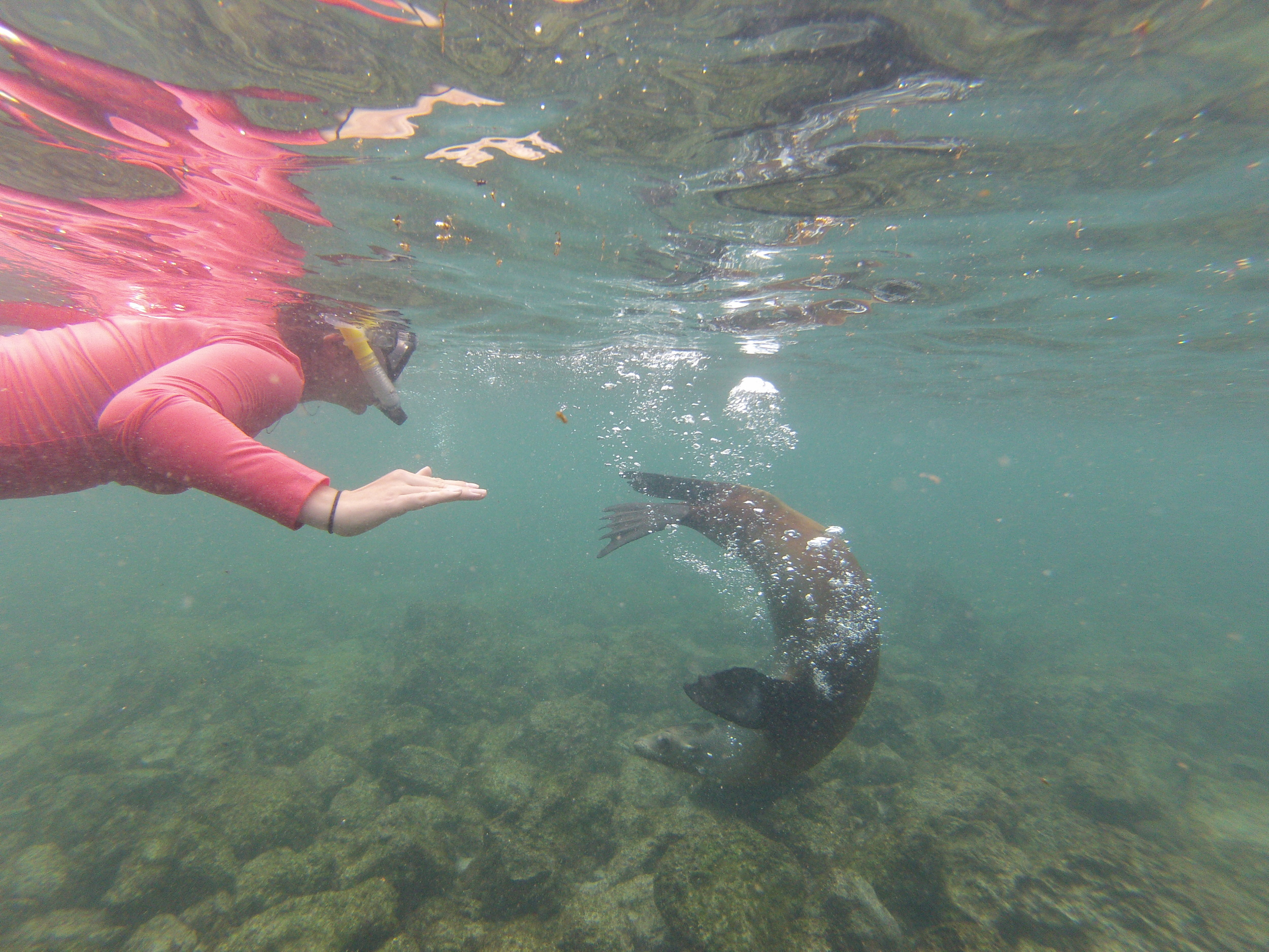 Galapagos Islands on a Budget Snorkeling with sea lions