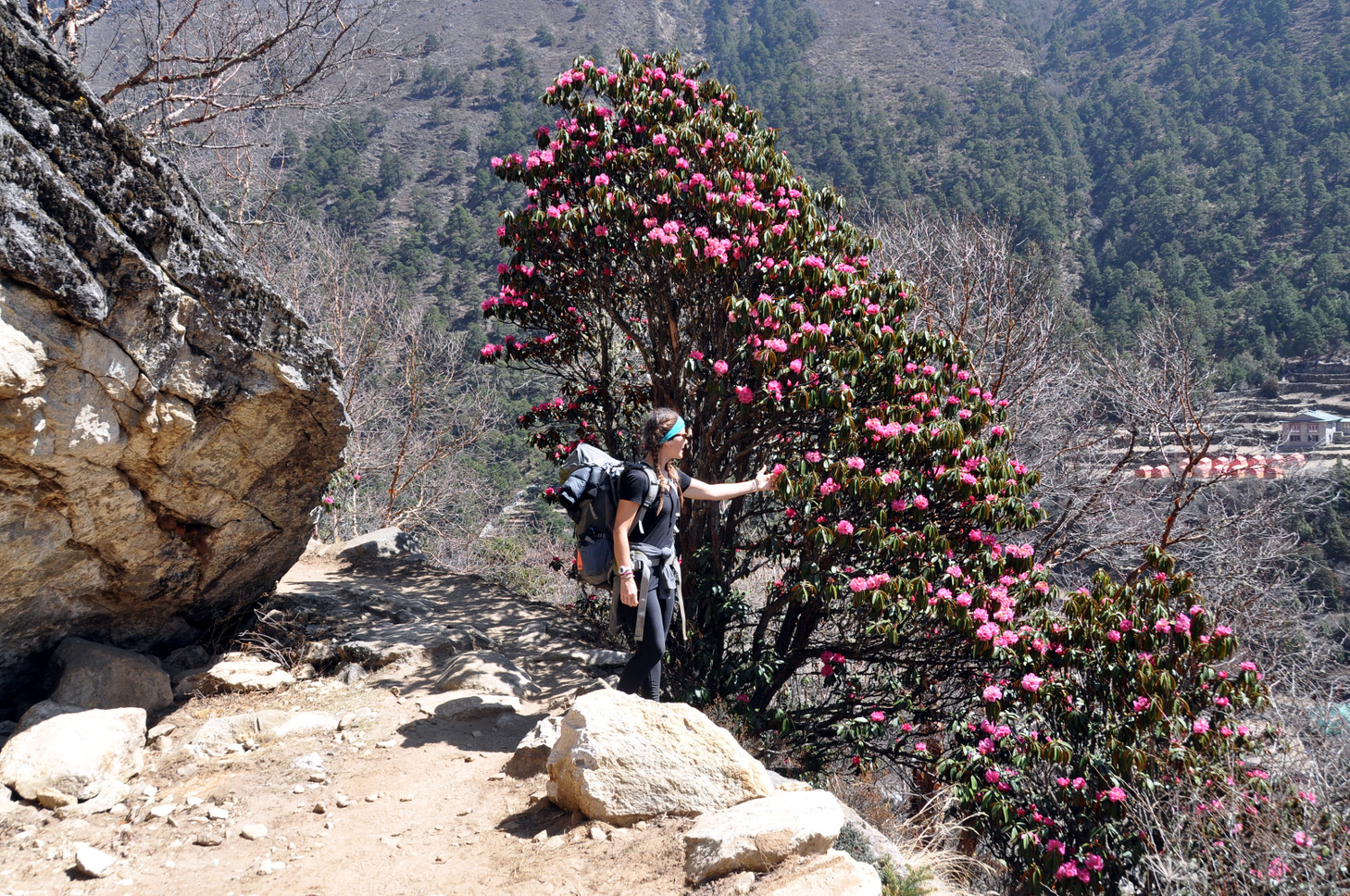 Flowers Rhododendrons Perfect Everest Base Camp Trekking Itinerary