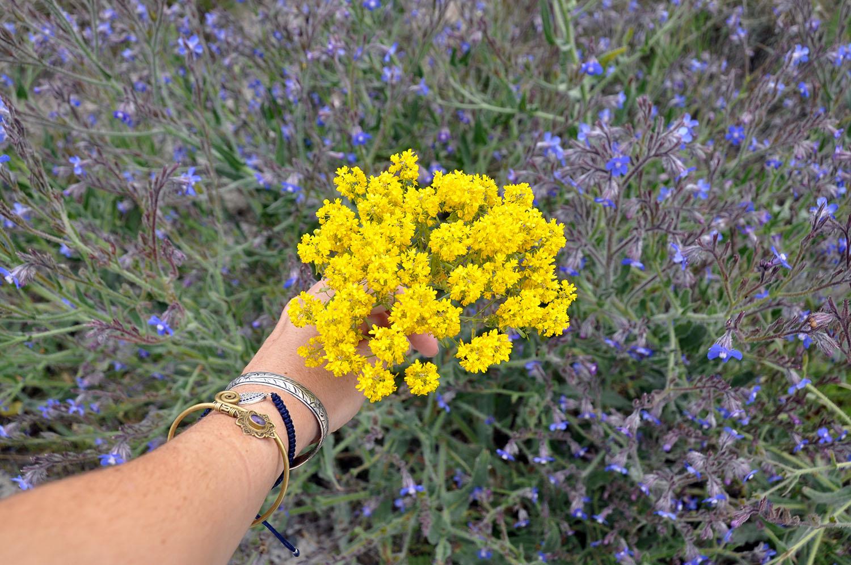 Wildflowers Turkey
