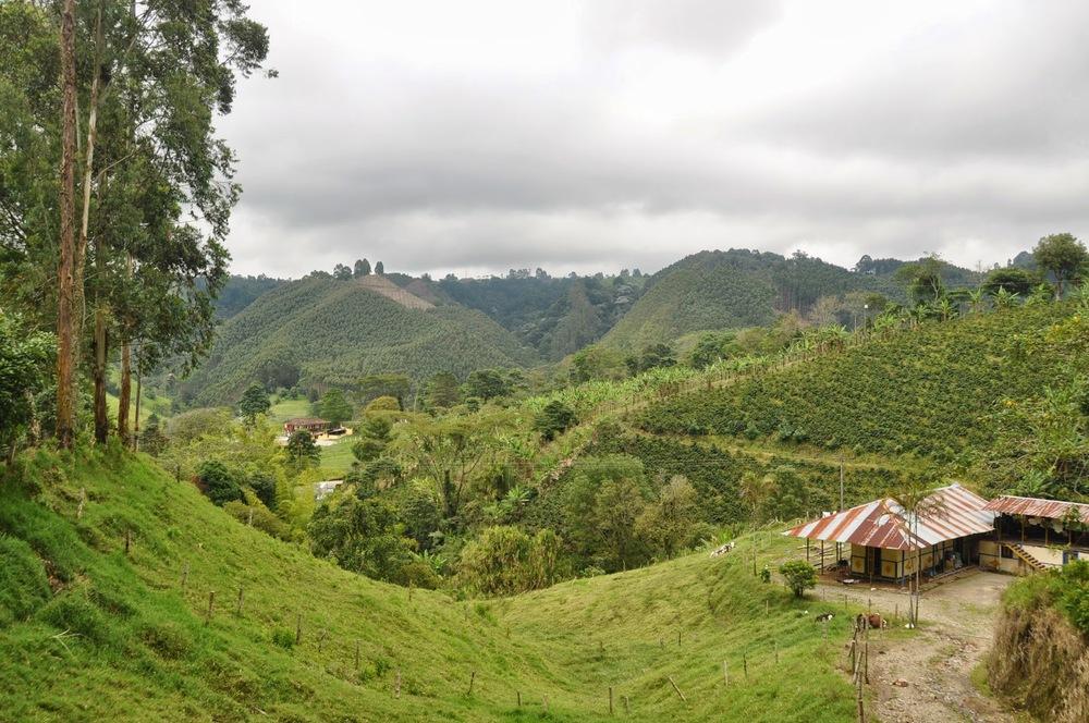 Salento Green Fields Coffee Colombia