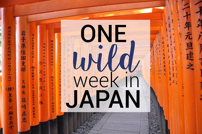 One Wild Week in Japan Orange Gates