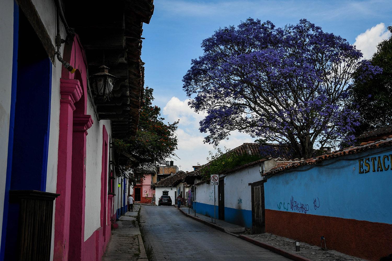 Things to Do in San Cristobal de las Casas Colorful Street Flowers
