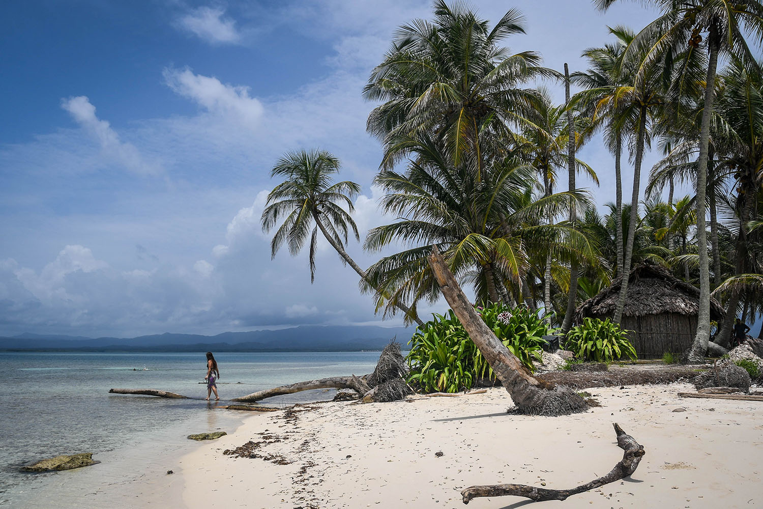 San Blas Islands Panama to Colombia Beach Palm Trees