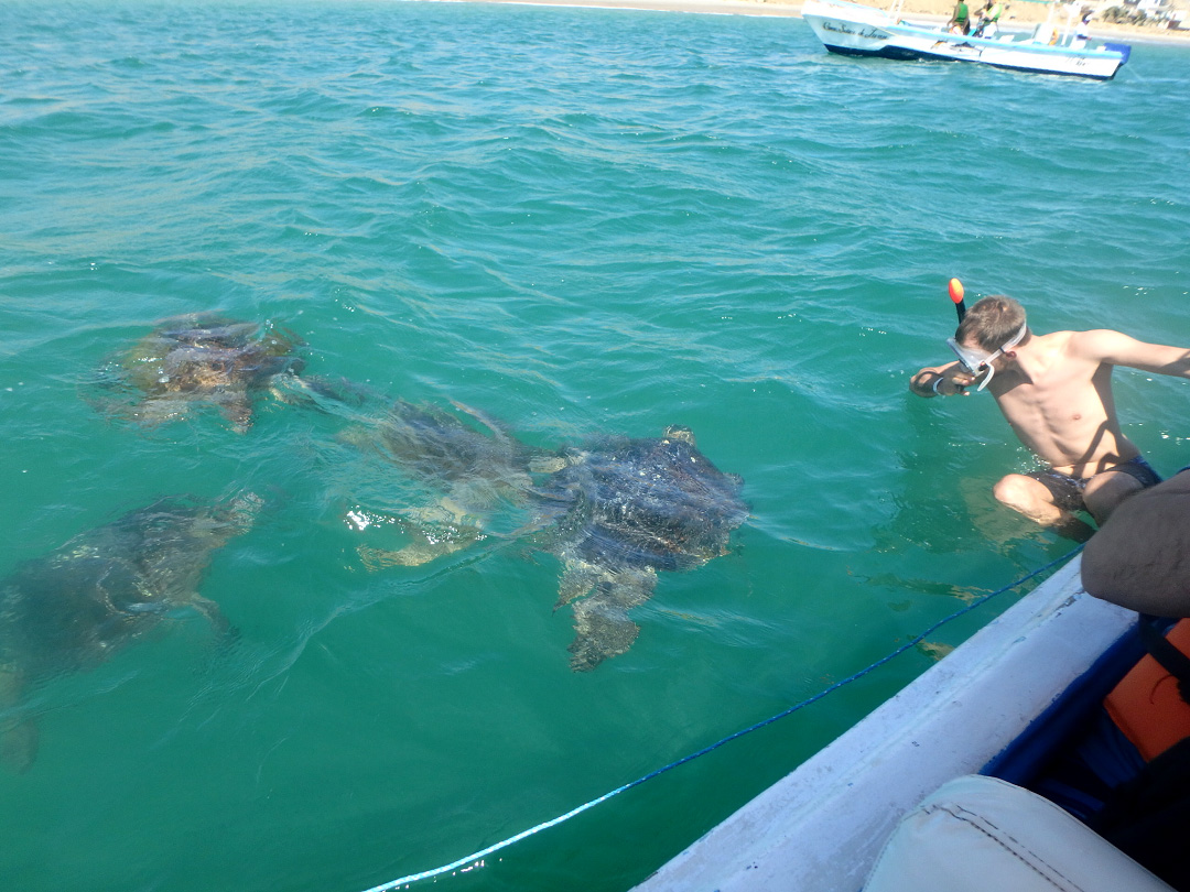 Things to Do in Peru: Swimming with Sea Turtles