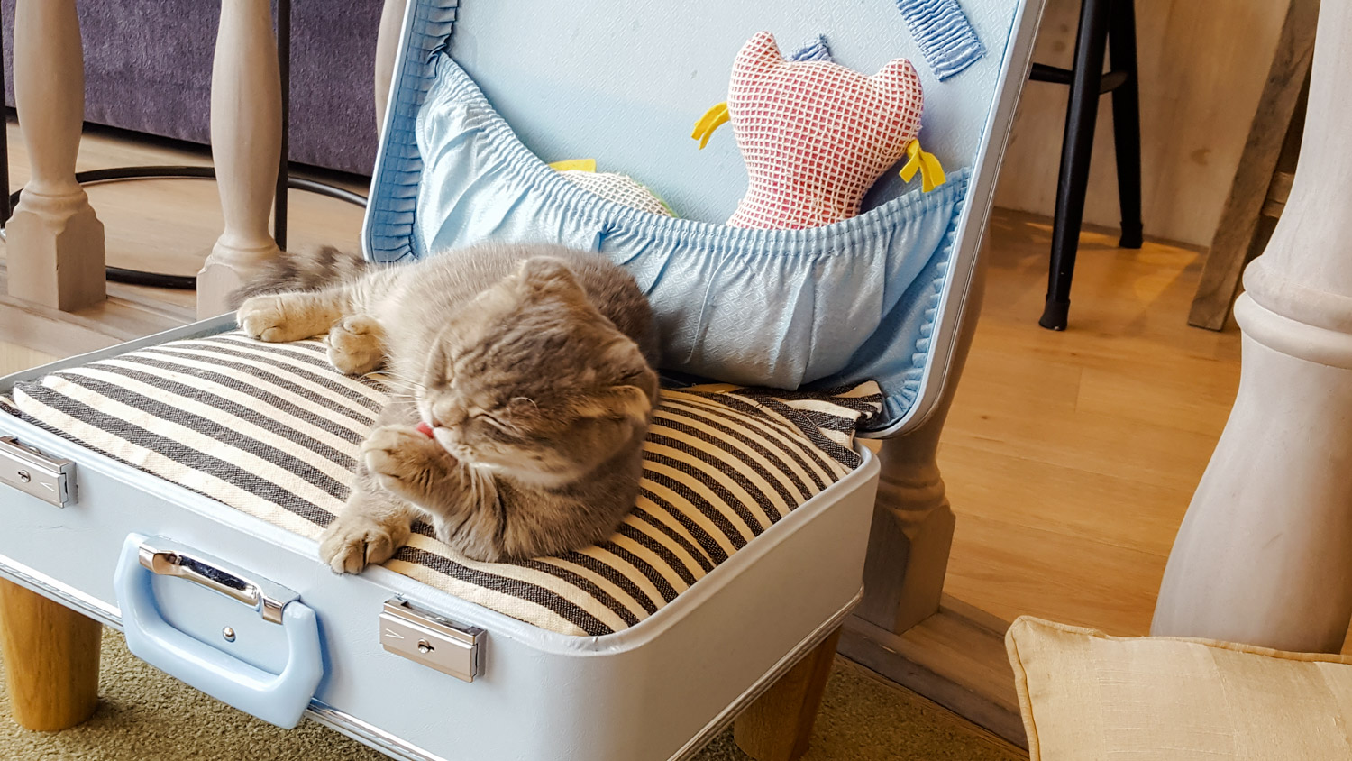 Things to do in Tokyo Cat Cafe MoCHA