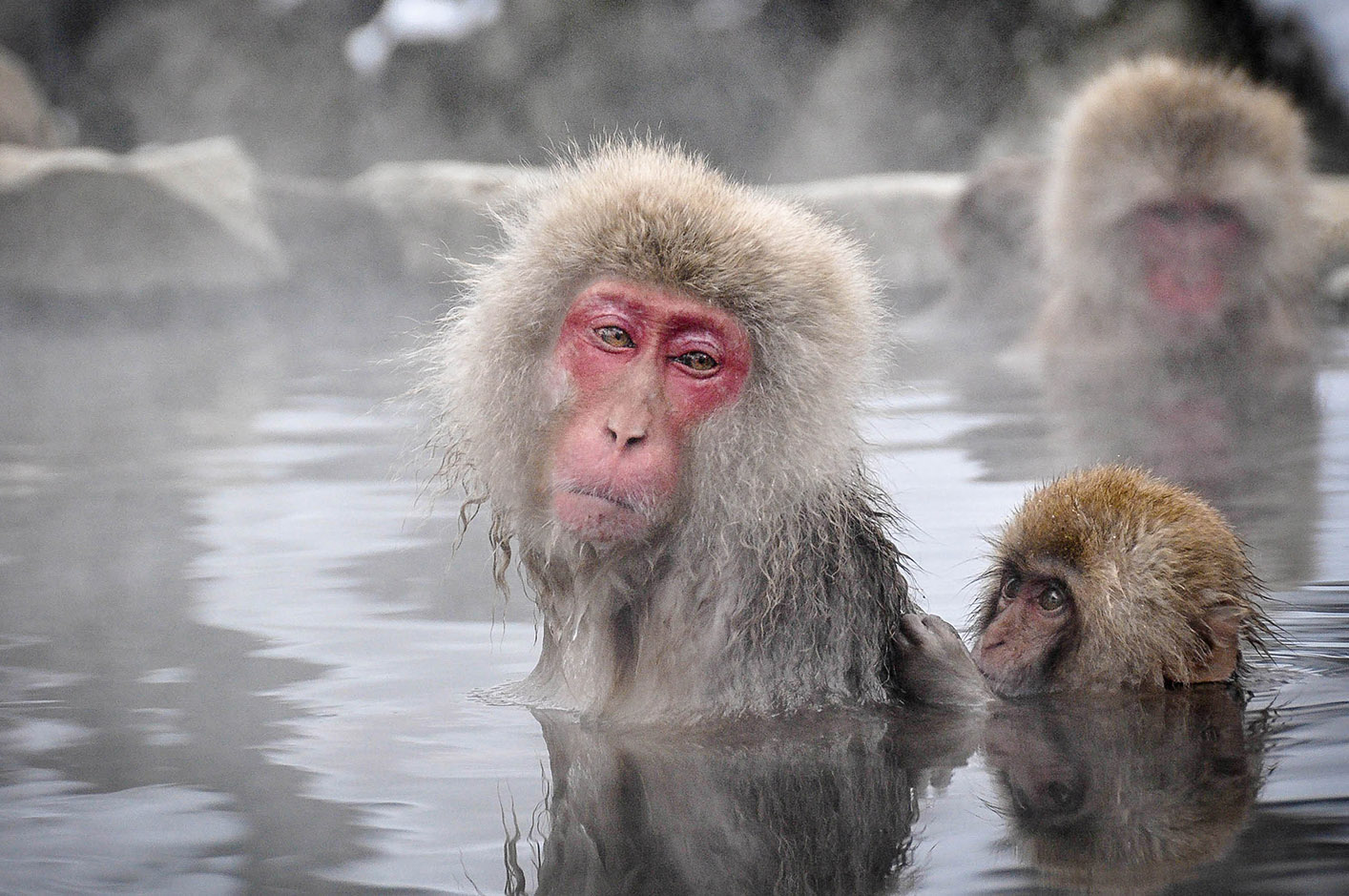 Snow Monkeys in Japan First timers Guide
