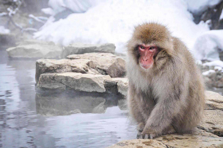 Snow Monkey Nagano Japan First timer guide