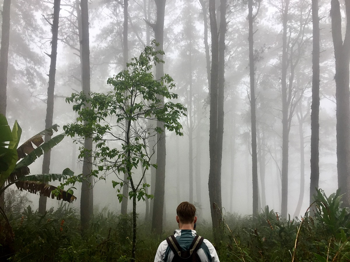 Chiang Mai Hiking Group Foggy Forest