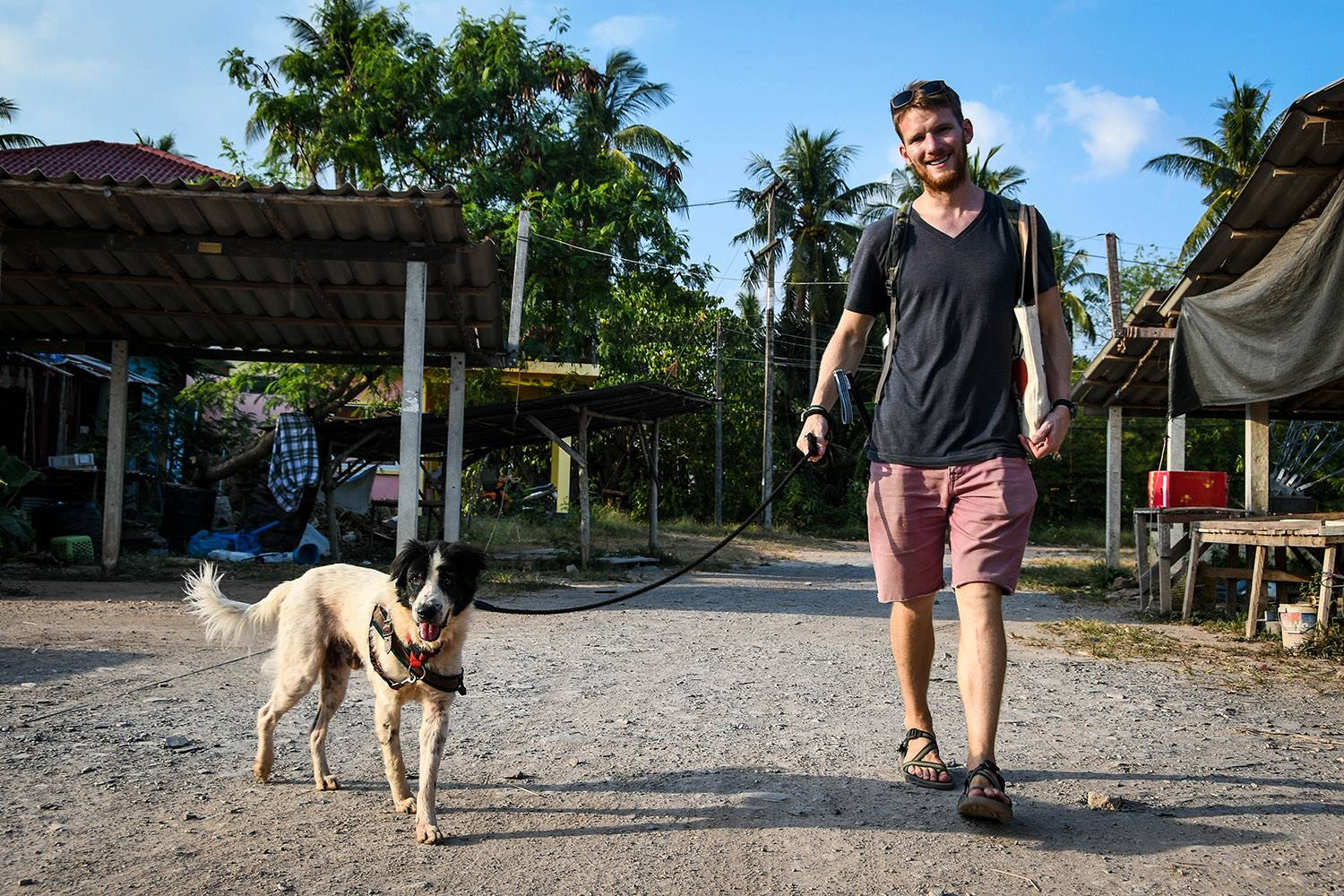Things to do in Koh Lanta Thailand Lanta Animal Welfare