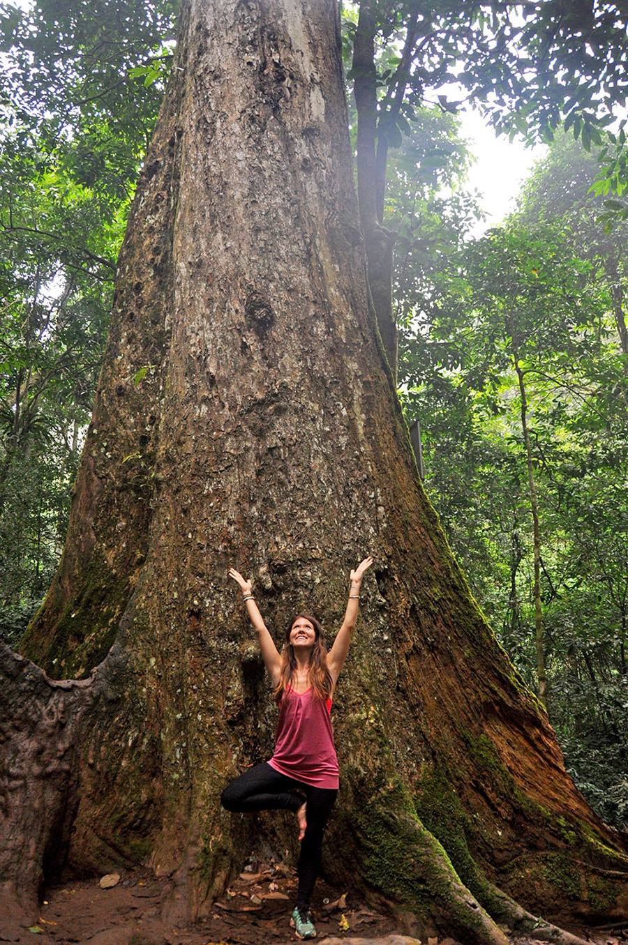 Tree Pose for 1000 year old tree Cuc Phuong Park Vietnam