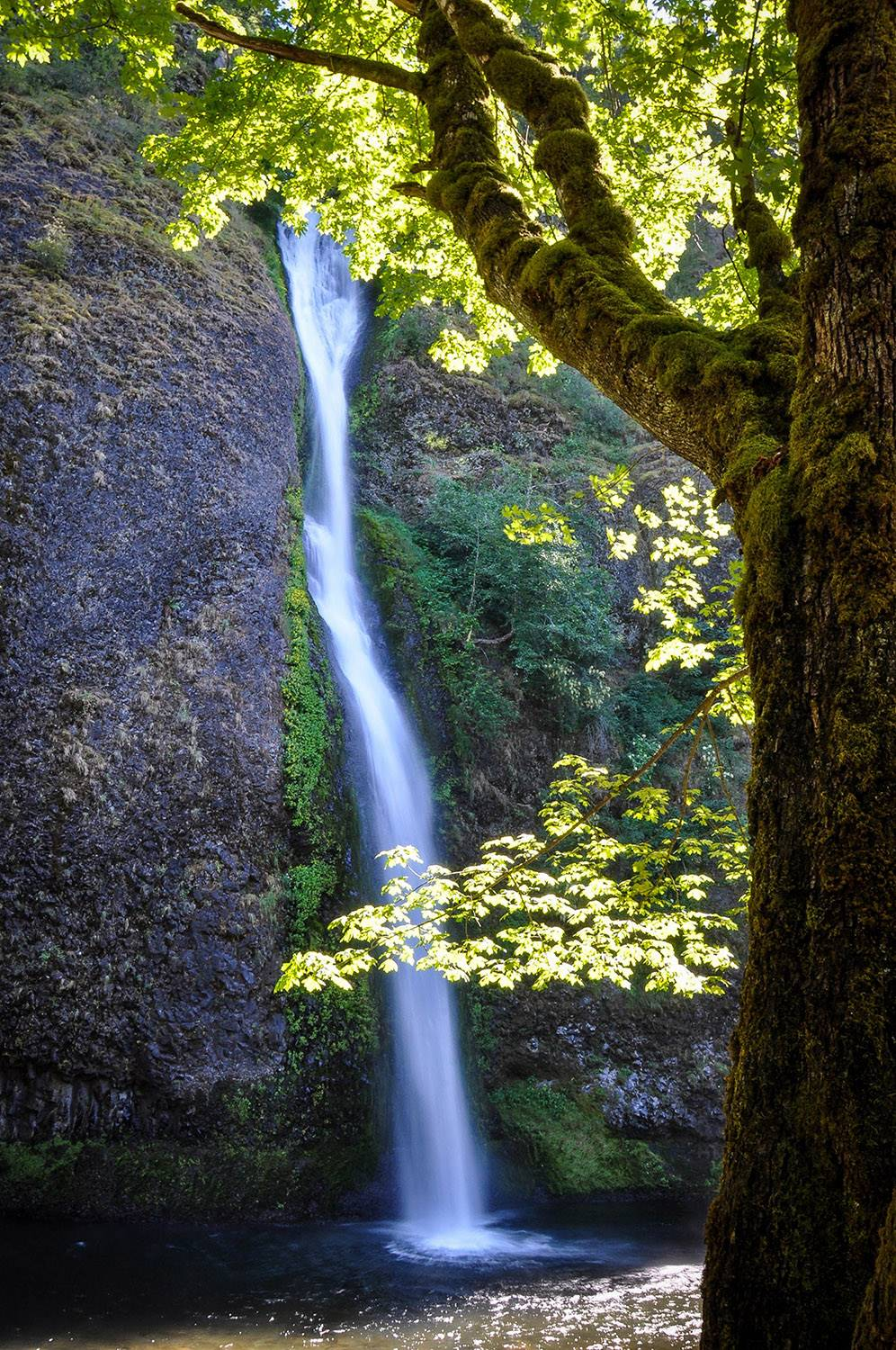 Things to do in Portland Horsetail Falls