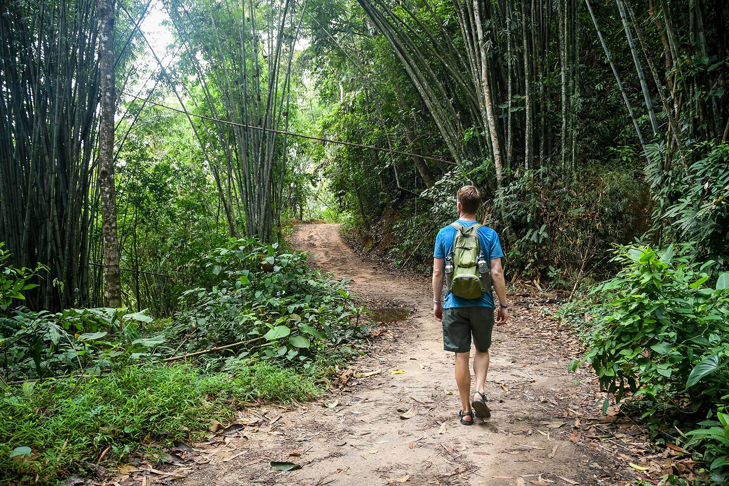 Khao Sok National Park Travel Guide Hiking Bamboo Forest