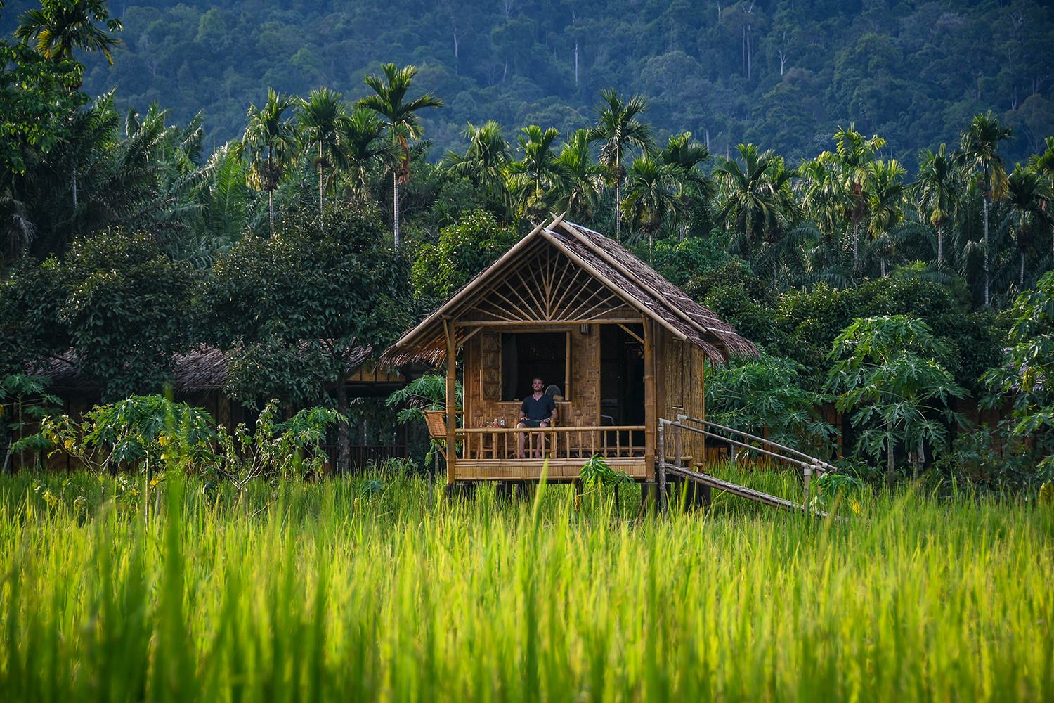 Khao Sok National Park Travel Guide Our Jungle Camp Bamboo Bungalow