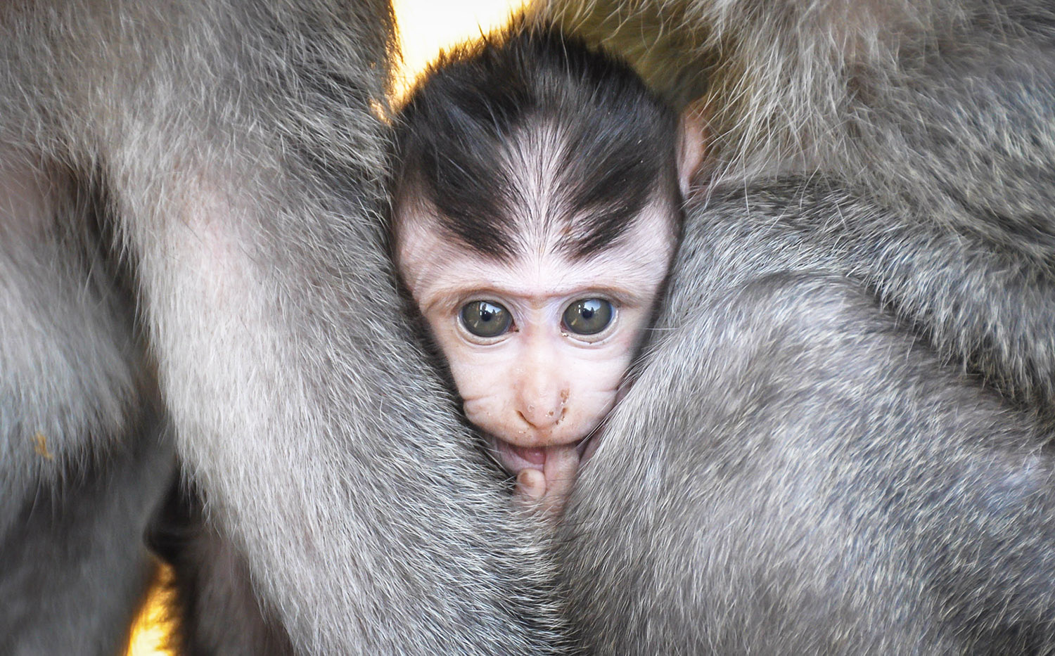 Bali Things to do Monkey Forest