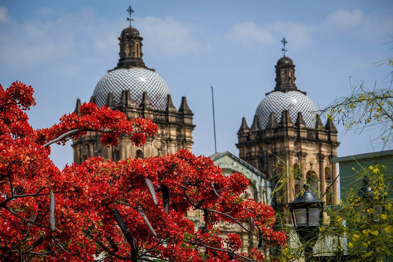 Things to Do in Oaxaca Ethnobotanical Garden
