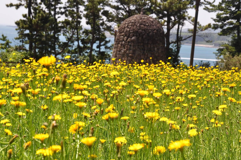 Jungmun Flowers Jeju Korea