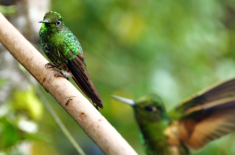 Hummingbird closeup photography tips