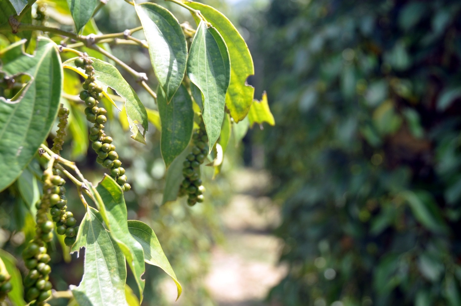 Two Weeks in Cambodia Itinerary Kampot Peppercorn