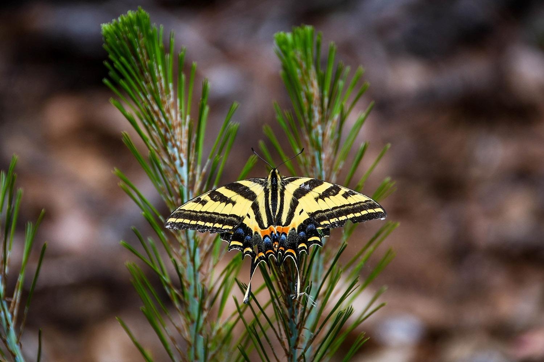 Hiking in Oaxaca's Sierra Norte Colorful Butterfly