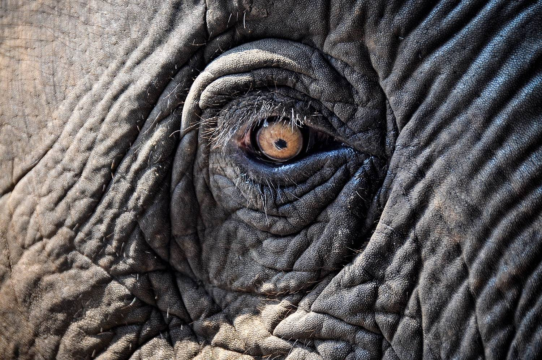 Sustainable Travel Thailand Tips Elephant Sanctuaries