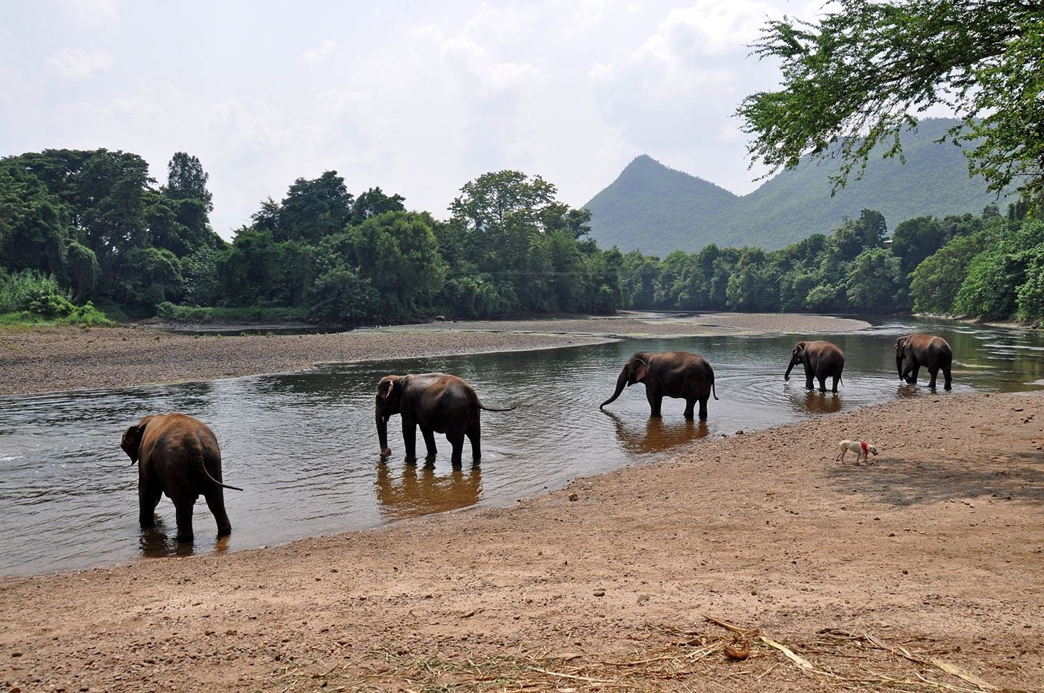 If you want to see elephants in Thailand, consider visiting an elephant rehabilitation center like  Elephants World  or  Elephant Nature Park .